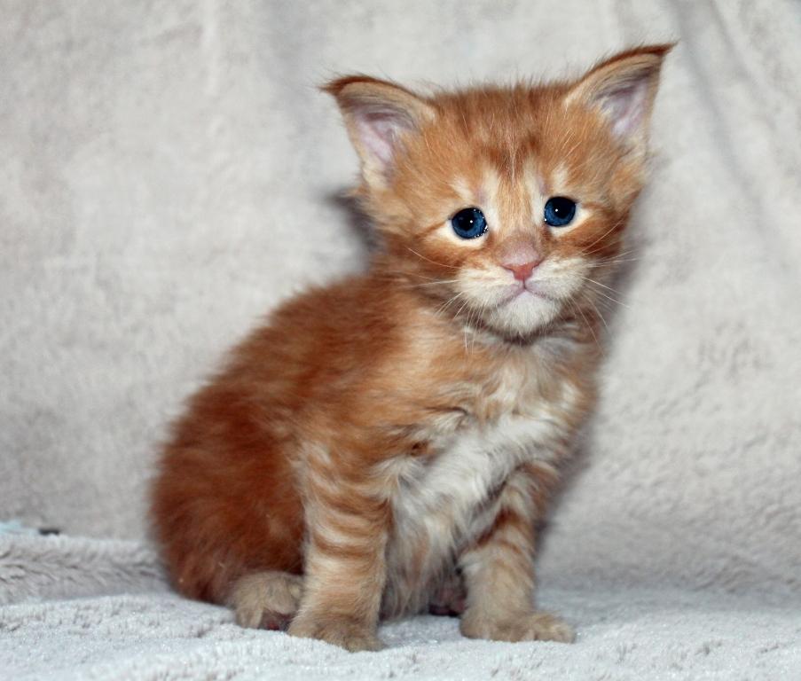 котята месяц фото